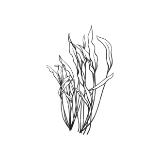 Tropical Plants Vector 1 5 Clip Art - SVG & PNG tropical