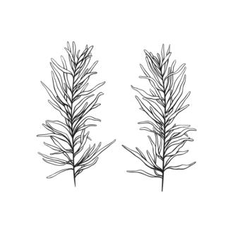 Tropical Plants Vector 1 7 Clip Art - SVG & PNG tropical