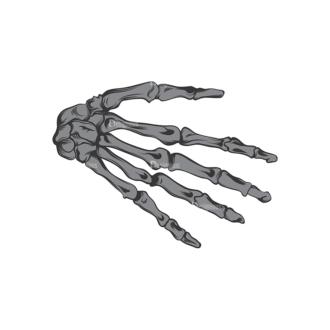 Skull Vector Clipart 16-19 Clip Art - SVG & PNG vector