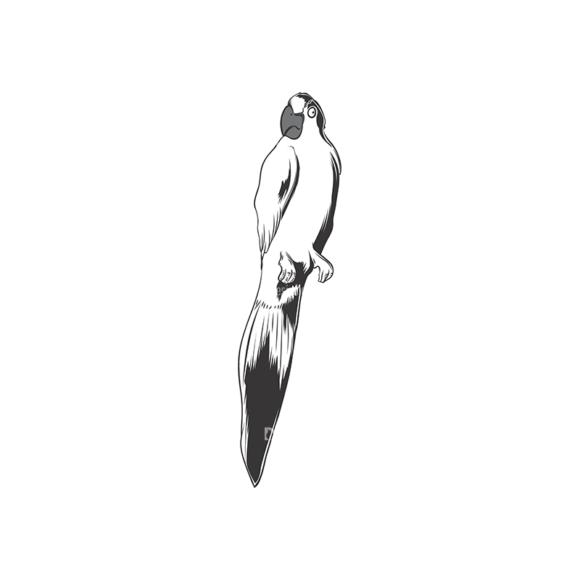 Skull Vector Clipart 17-15 Clip Art - SVG & PNG vector
